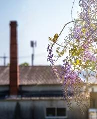 西陽と紫草