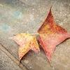 落ちてきたばかりの秋