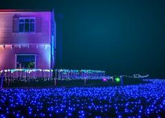 Electric Purple Land