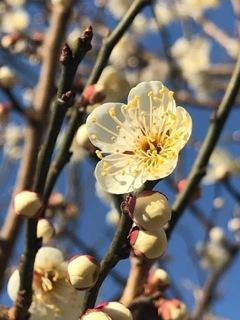 春の予感②