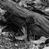濡れて漆黒の倒木