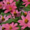 プランタで咲いてた花4