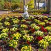 花壇の風景3