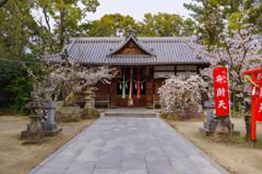 桜咲く神社の風景1