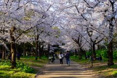 2021大阪城公園の桜21