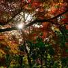 紅葉と光芒