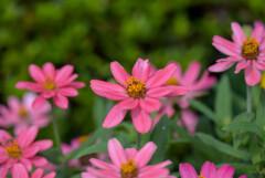プランタで咲いてた花1