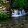万博記念公園木漏れ日の滝3