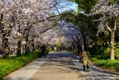 2021大阪城公園の桜18