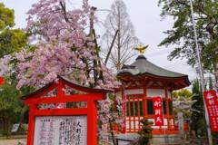桜咲く神社の風景2