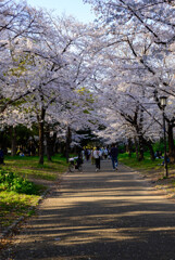 2021大阪城公園の桜24
