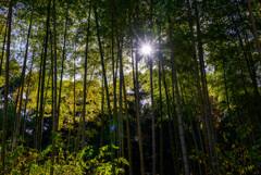竹林に差す光