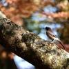 落ち葉のふる森で