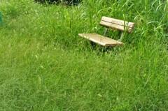 埋もれちまったベンチ