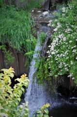 用水路の滝