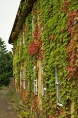 壁での紅葉