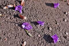 落ちた花。