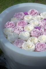水盆:淡いバラたち。