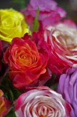 水盆のバラ。