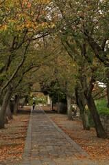 遊行寺の参道。