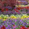 花壇:色とりどり