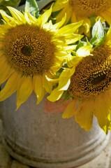 秋のひまわり:生け花