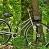 森の中で自転車