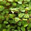 雨上がりの観葉植物