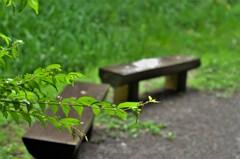 雨のベンチ:ひとのいない公園