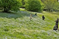 ネモフィラ畑で走る少女