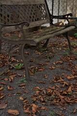 壊れてしまったベンチ:初秋の落葉