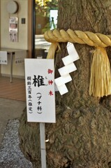 座間神社:御神木