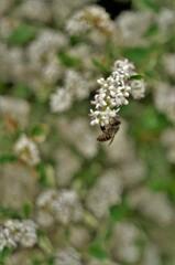 白花に訪れたハチさん。