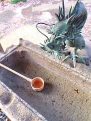 枯れた手水:神主さんがいない神社