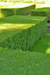 フランス式庭園:ボックスウッド