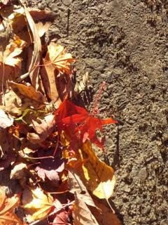 吹きだまった落ち葉