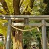 五社神社:鳥居とご神木