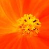 2020夏の花その5の4