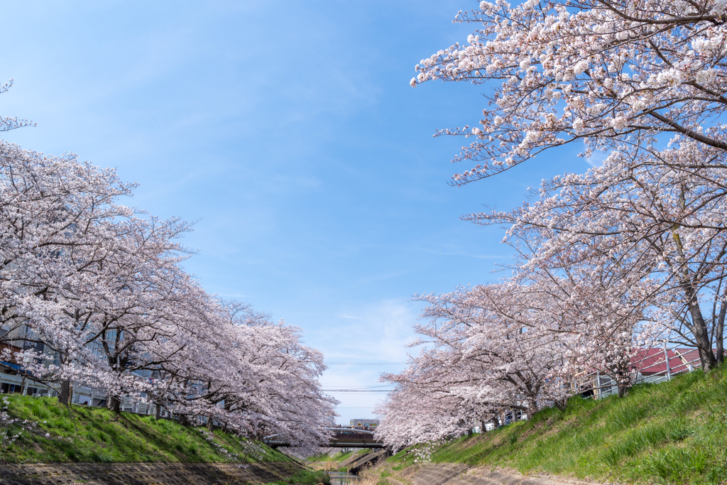 桜と空を見上げる