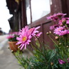 街道を飾る花