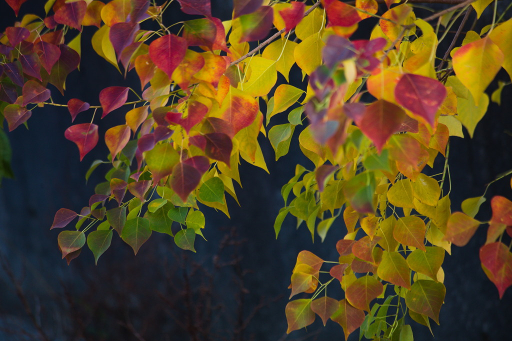 秋色のパレット Ⅱ
