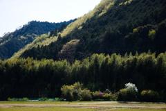 平成村の春