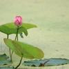 三途の川に咲く