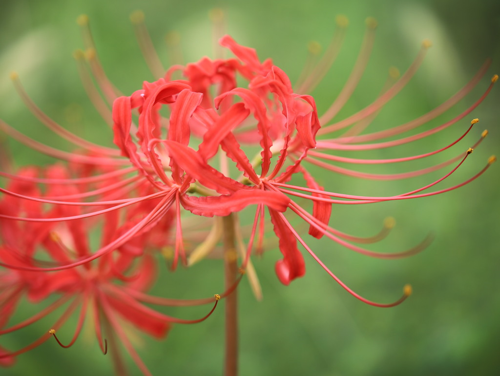 天界に咲く花