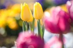 お先に初春