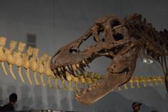 恐竜さんガオー