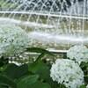 噴水の季節