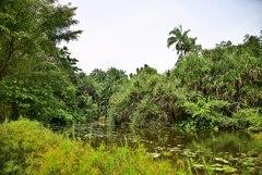 Botanic Garden 3 (11)_00001