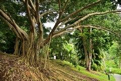 Botanic Garden 3 (30)_00001