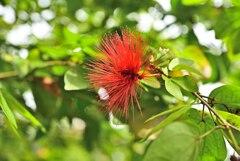 Botanic Garden 3 (14)_00001